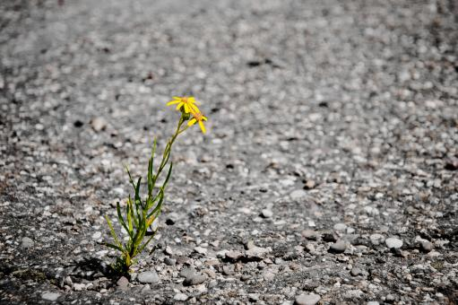Lonely flower - Free Stock Photo