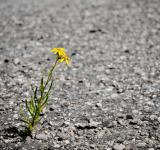 Free Photo - Lonely flower