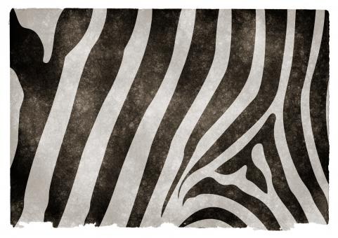 Zebra Stripes Grunge Paper - Free Stock Photo