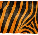 Free Photo - Tiger Stripes Grunge Paper