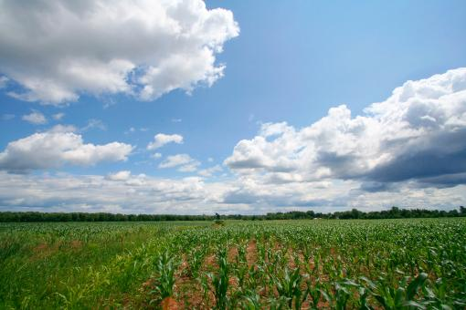 Agricultural Landscape - Free Stock Photo
