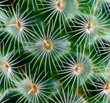 Free Photo - Cactus Texture