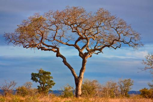 Kruger Park Scenery - HDR - Free Stock Photo