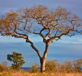 Free Photo - Kruger Park Scenery - HDR