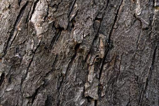Wood Bark Texture - Free Stock Photo