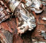 Free Photo - Wood Bark Texture