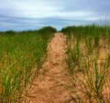 Free Photo - Beach Trail - HDR