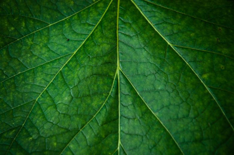 Leaf texture - Free Organic Backgrounds