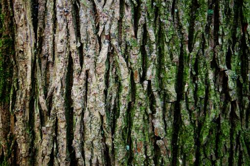 Tree trunk texture - Free Stock Photo