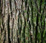 Free Photo - Tree trunk texture
