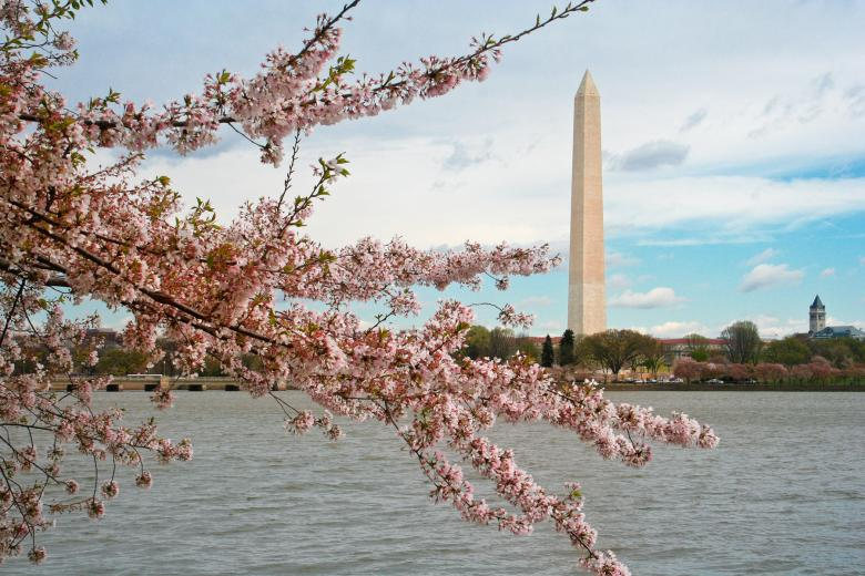 Free Stock Photo of Washington DC Cherry Blossoms Created by Nicolas Raymond