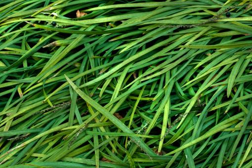 Grass Texture - HDR - Free Stock Photo