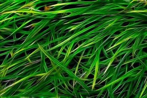 Grass Texture Abstract - Free Stock Photo