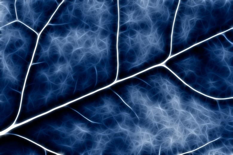 Blue Crucifer Abstract - Free Abstract Backgrounds