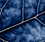 Free Photo - Blue Crucifer Abstract