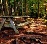Free Photo - Forest Picnic Table - HDR