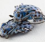 Free Photo - Beetle Love