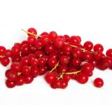 Free Photo - red currant