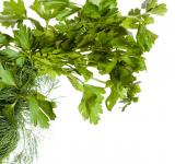 Free Photo - parsley
