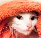 Free Photo - cat in towel