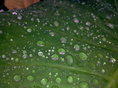 Water drops on green leaf - Free Stock Photo