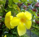 Free Photo - Two yellow flowers