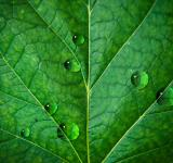 Free Photo - Waterdrops on leaf