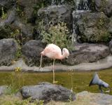 Free Photo - Flamingo