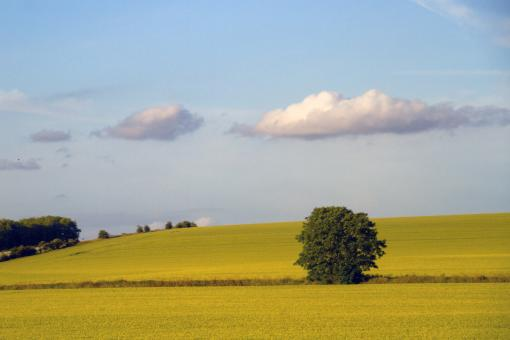 Tree and Field - Free Stock Photo