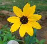 Free Photo - Yellow Mellow
