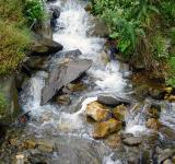 Free Photo - Small Water Flow