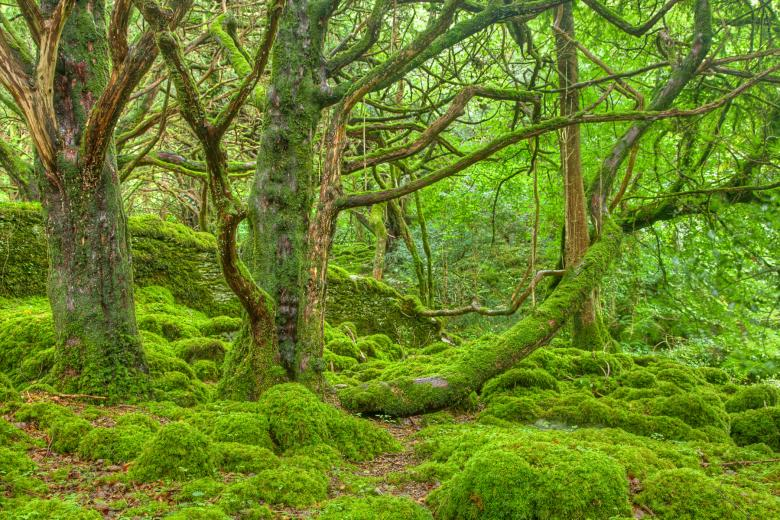 Free Stock Photo of Killarney Forest - HDR Created by Nicolas Raymond