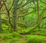 Free Photo - Killarney Forest - HDR