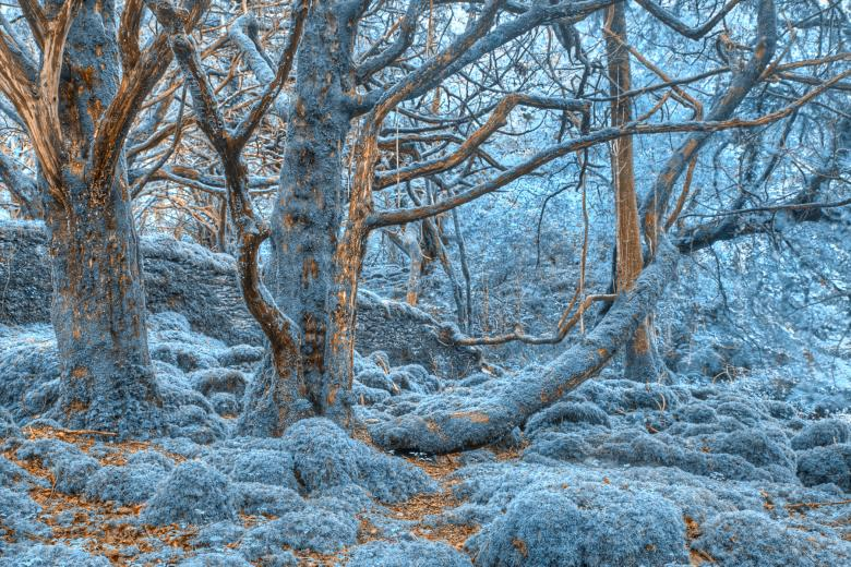Killarney Forest - HDR - Free Forest Stock Photos