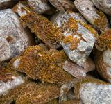 Free Photo - Mossy Rocks Texture
