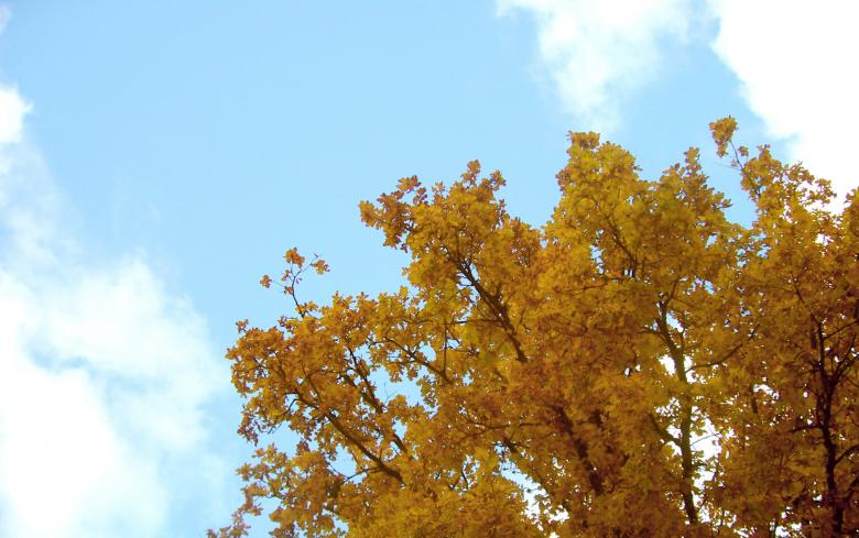 Free Stock Photo of Autumn tree Created by Laura Dambite