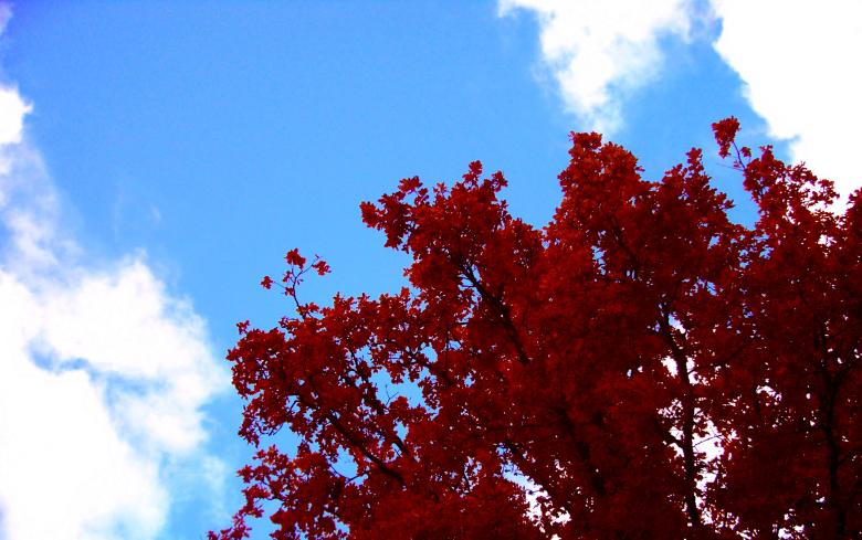 Free Stock Photo of Autumn tree red Created by Laura Dambite