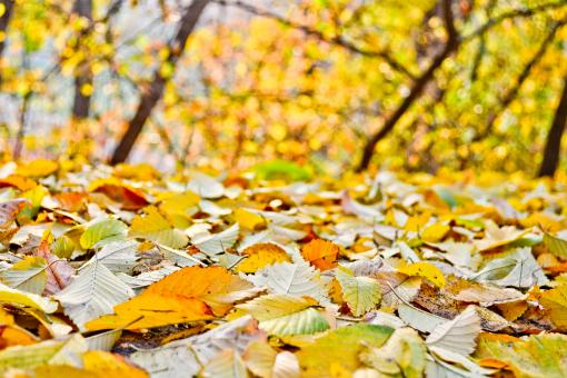 Autumn leafs in the park - Free Stock Photo