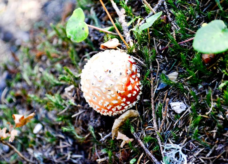 Free Stock Photo of Mushroom Created by Octavian