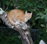 Free Photo - Tabby in Tree