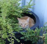 Free Photo - Tabby in Pot