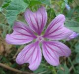 Free Photo - A little purple autumn wildflower