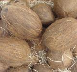 Free Photo - Coconuts