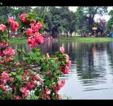 Free Photo - Pink Flowers by Lake