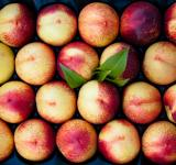 Free Photo - Peaches