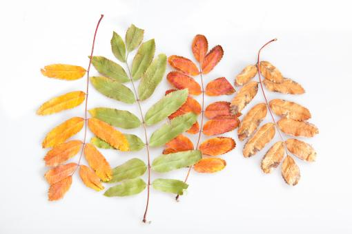 leaves - Free Stock Photo