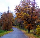 Free Photo - Into autumn