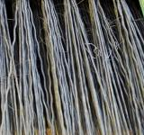 Free Photo - Forest of Bristles