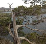 Free Photo - River through Pine tree