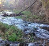 Free Photo - Babbling Brook rapids